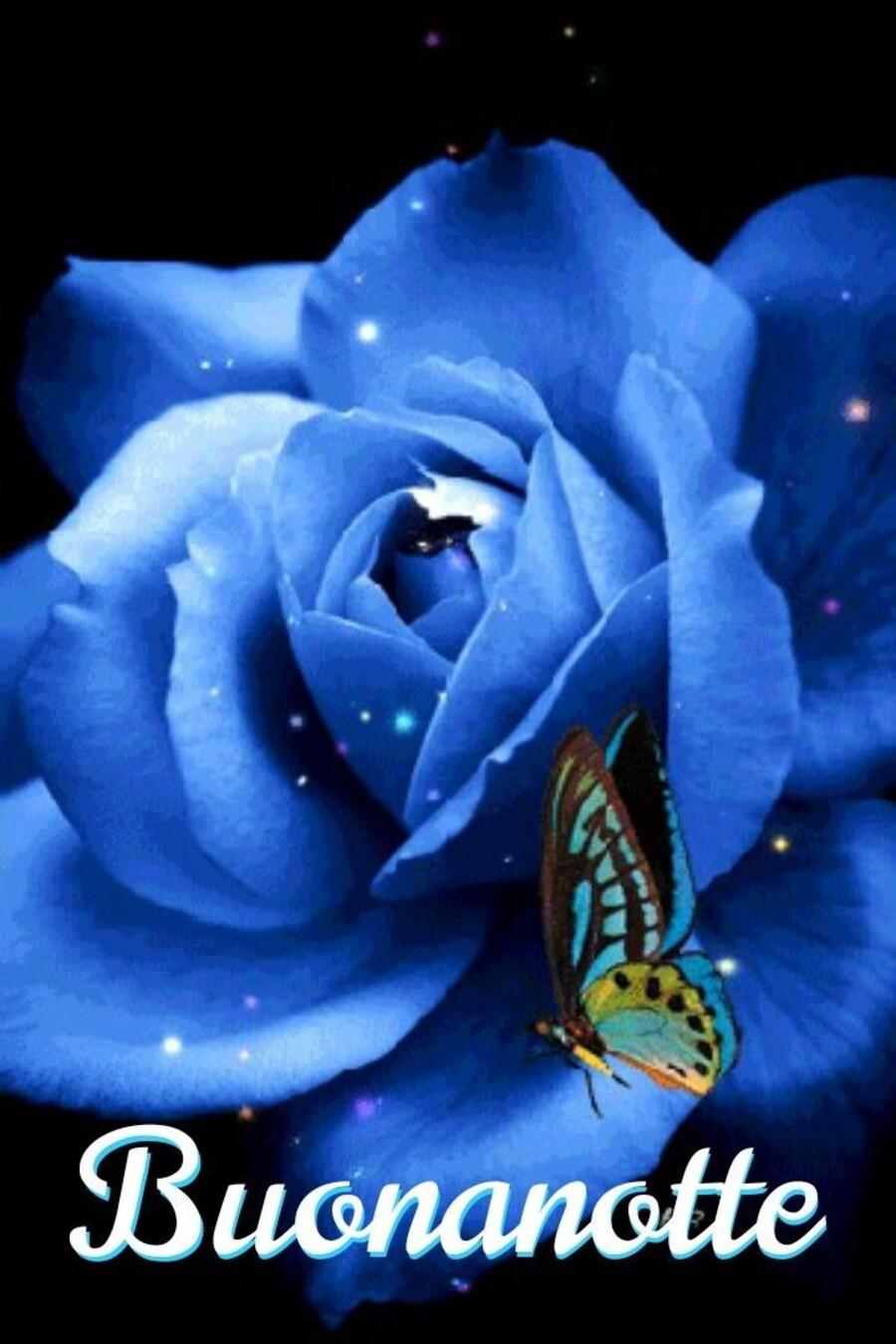 Buonanotte con una rosa blu