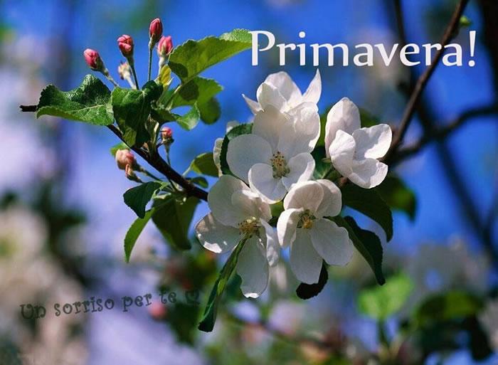 """""""Primavera!"""""""