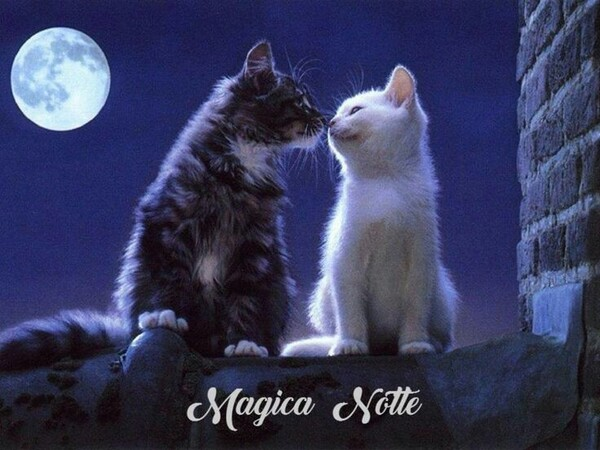 Immagini di Buonanotte bellissime