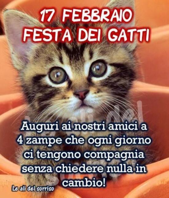 """Immagini per la Festa del Gatto - """".....Auguri ai nostri amici a quattro zampe che ogni giorno ci tengono compagnia senza chiedere nulla in cambio!"""""""