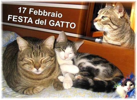 """""""17 Febbraio Festa del Gatto"""""""
